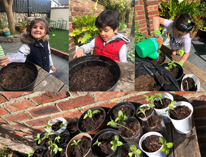 Flo and Wren from Oystermouth Primary grow 21 sunflower seedlings!