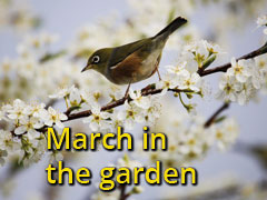 march in the garden