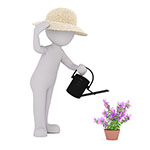 swansea in bloom gardener